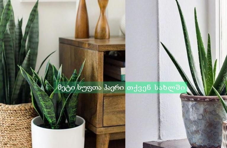 მეტი სუფთა ჰაერი თქვენ სახლში- როგორ გავამწვანოთ საძინებელი